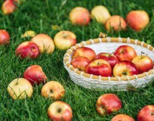 Sezona jabolk - recept za slasten jabolčni kruh!
